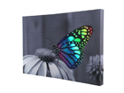 LED taulu CHANGING BUTTERFLY 60x40 cm ED-116001