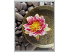 Taulu MODERN - PINK FLOWER 20x25 cm