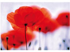 Kuvatapetti MAGICAL POPPIES 400x280cm ED-88123