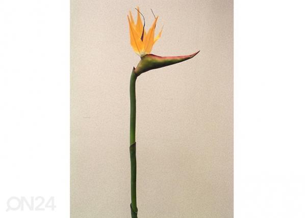 Paratiisilintu kukka, 1 kpl