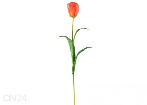 Tulppaani, 3 kpl