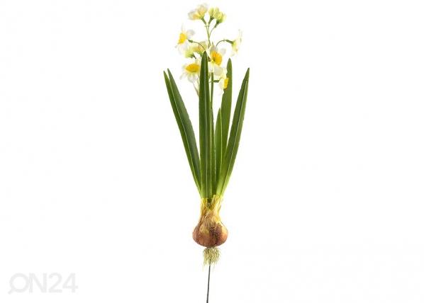 Narsissi+sipuli, 3 kpl