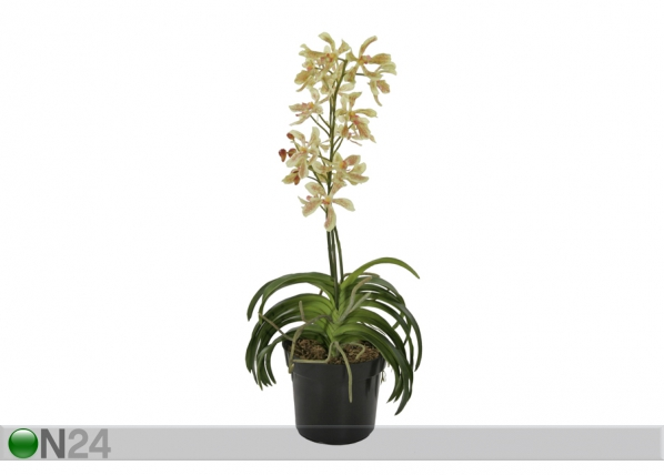 Teko-orkidea ruukussa