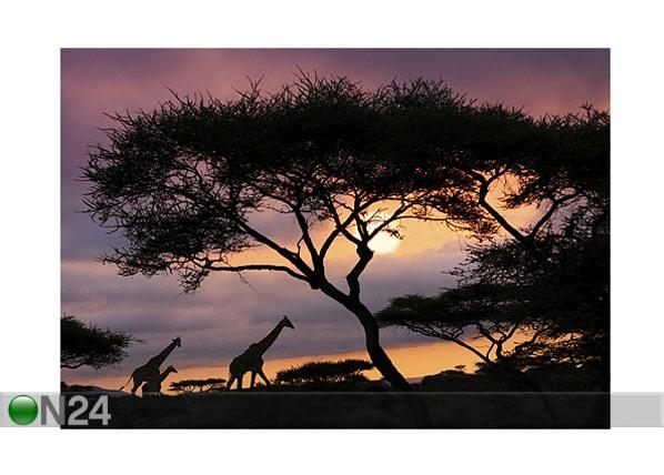 Kuvatapetti AFRICAN SAFARI 400x280cm