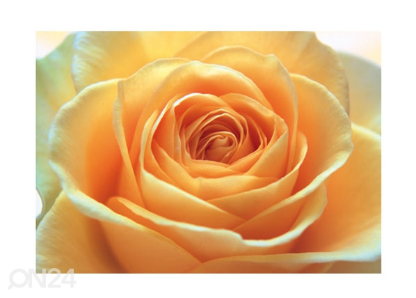 Kuvatapetti THE ORANGE ROSE 400x280 cm ED-88125
